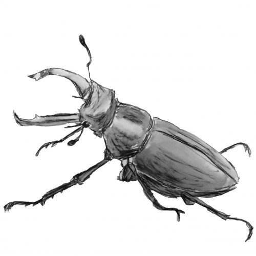 Stag beetle, Daryl Haines, poetry, performance, Faversham, poet