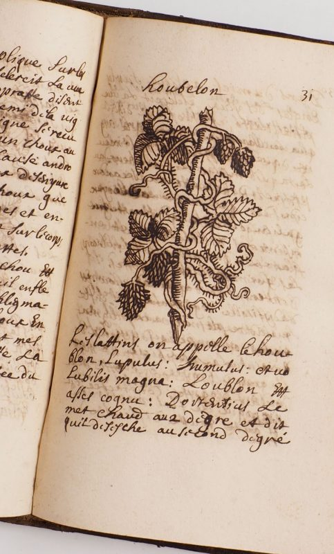 Antiquarian books: Hops from a French 17th century herbal