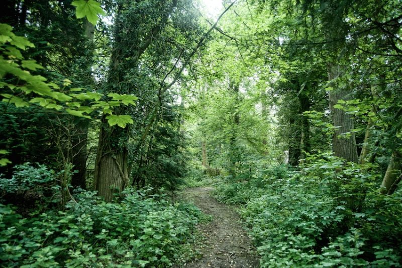 The woodland garden at Doddington, the setting for bushcraft and encounters with creepy crawlies