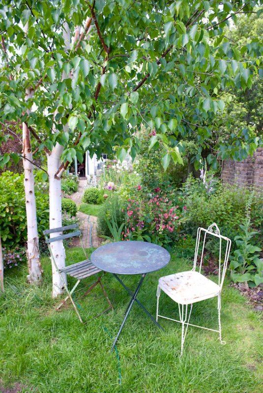 White birches provide dappled shade
