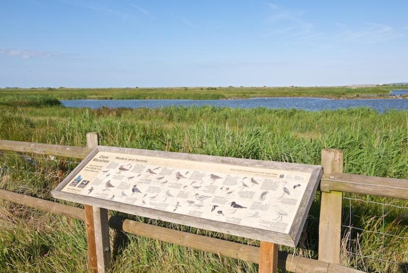 Walk to Oare Nature Reserve
