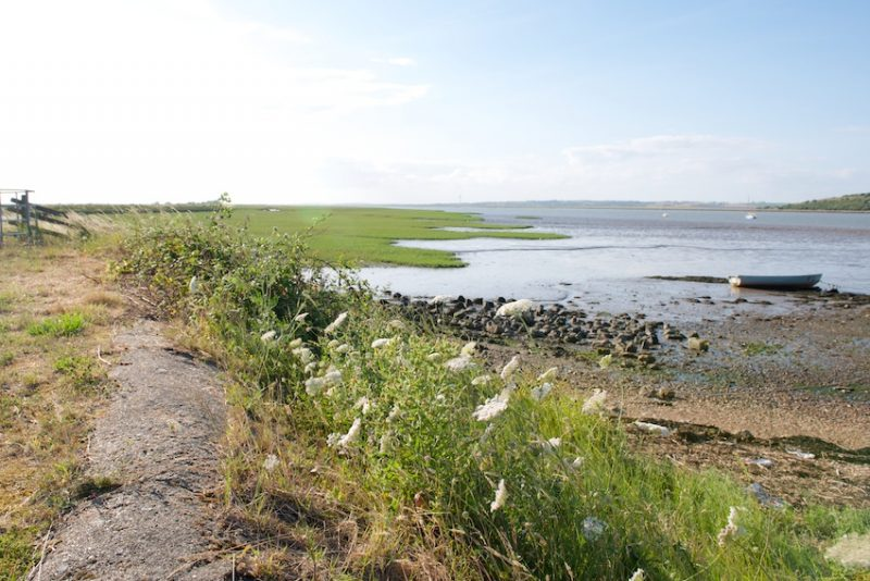 Walk the estuarine landscape around Faversham