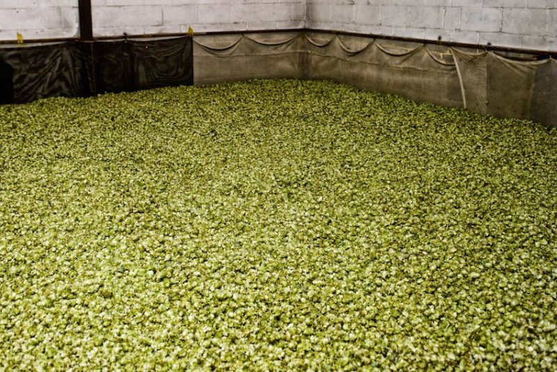 Kentish hops. The demand for hops is growing