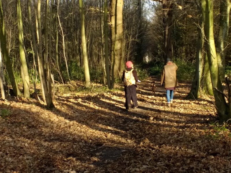 A winter walk around Faversham. Long woodland shadows