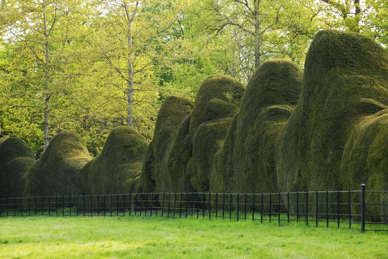 DODDINGTON PLACE GARDENS, KENT: MASSIVE CLIPPED YEW HEDGES IN SPRING