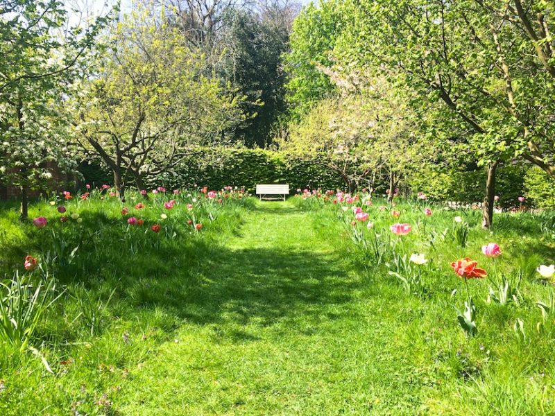 Finding repose in an orchard with tulips © Lisa Valder