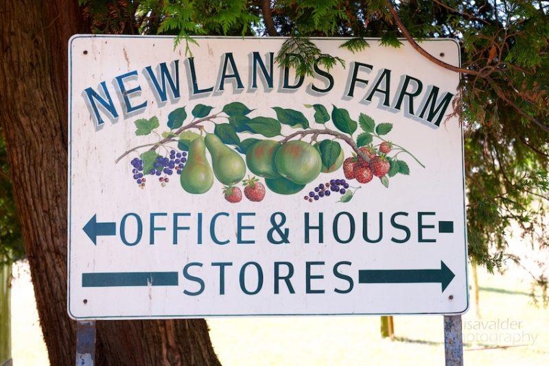 Newlands Farm strawberries