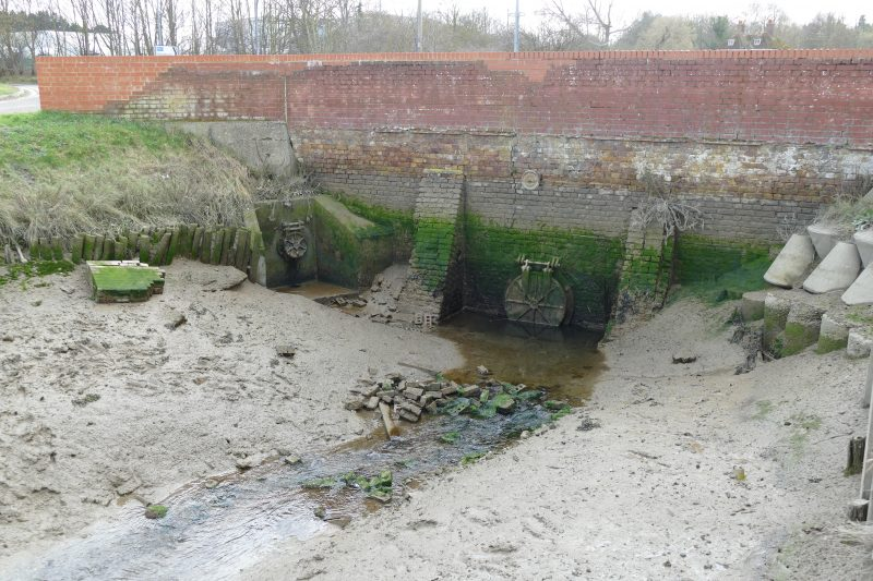 After travelling 4000 miles, glass eels are fatally trapped when they reach the sluices in Faversham
