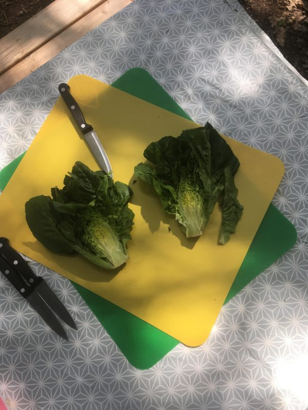 Preparing the lettuce