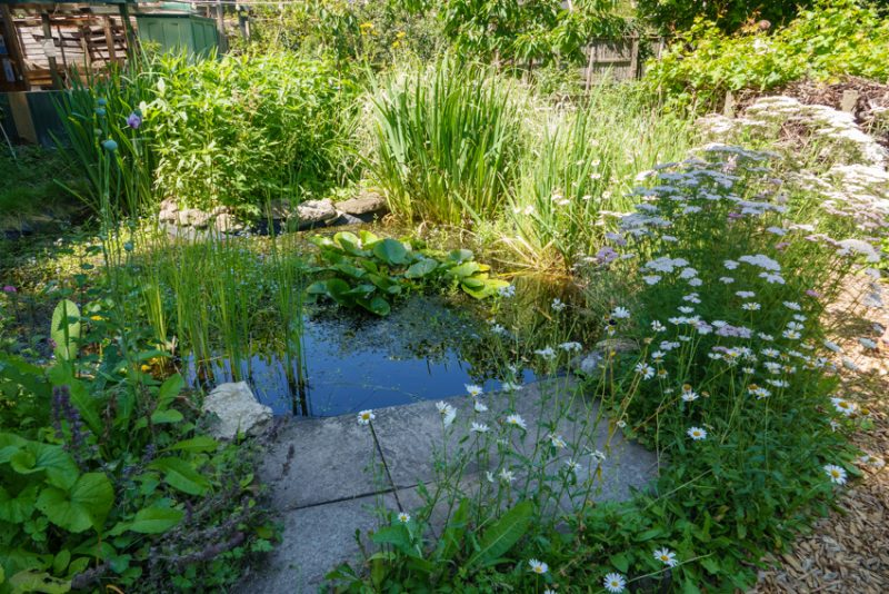 The pond is brimming with wildlife.